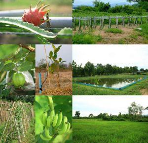 ฟาร์ม1